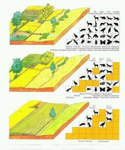 Een tekening met verschillende landschapselementen en het effect op de hoeveelheid diersoorten.